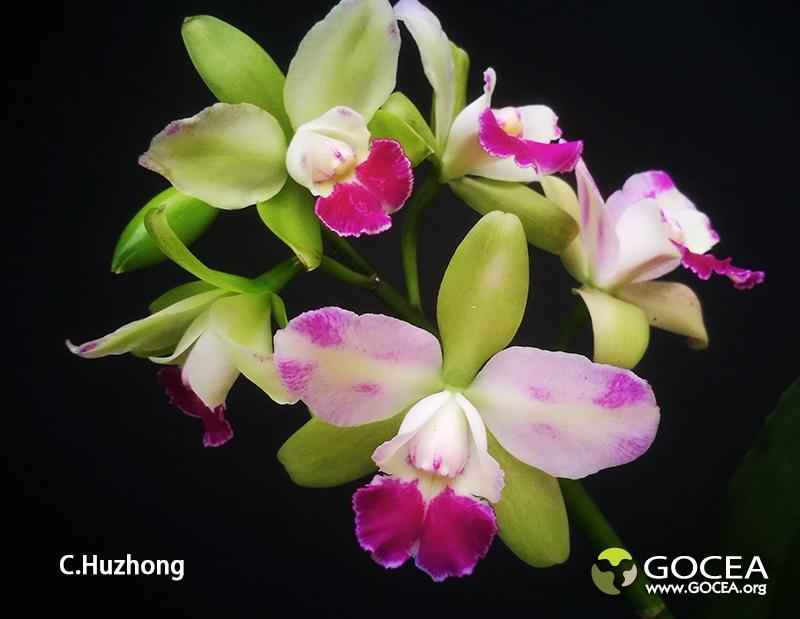 C.Huzhong_170743.jpg