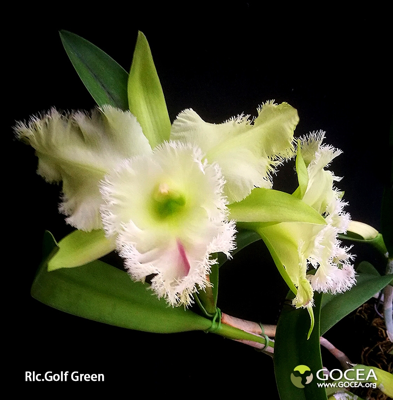 Rlc.Golf  Green (2).jpg
