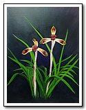 orchid_216.jpg