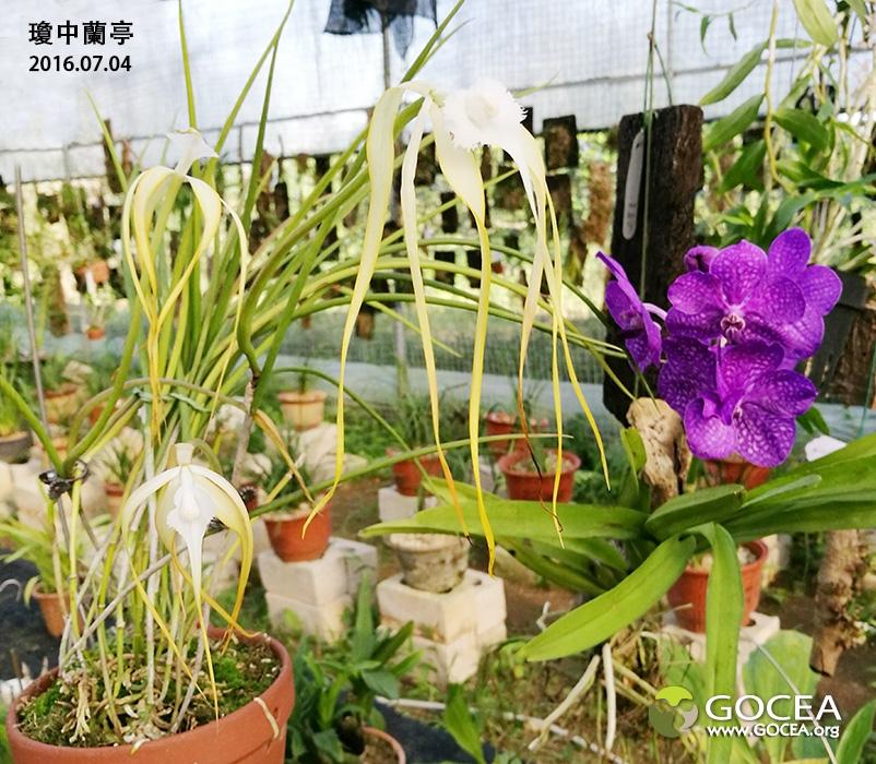 2016-7-4 瓊中蘭亭 (1).jpg
